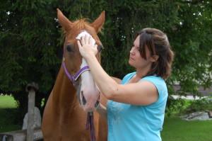 Pferde Osteopathie am Kopf